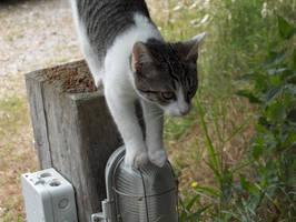 Kitty Cat by GMAC06