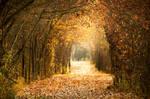 Autumn Fades by islandtime