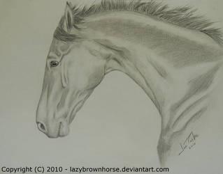 Starlight by lazybrownhorse
