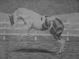 Bucking Bronco by lazybrownhorse