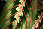 Leaves by tash23