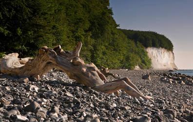 Kreidewurzel-Jungfrau by MetamorphosisV
