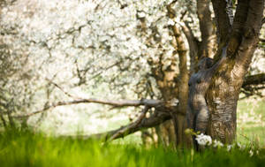 visions of spring by MetamorphosisV