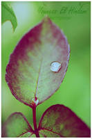 Water drop 3 by nessyou02