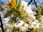 Blossom by matpreece