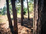 Trees by matpreece