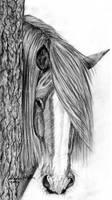 Shy Horse by farfinmosker