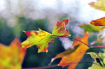 autumn by Noise-Less