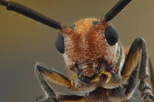 Longhorned Beetle by AlHabshi