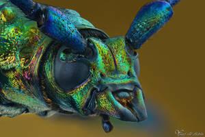 Musk Beetle by AlHabshi
