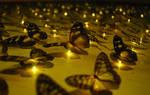 Butterfly army by evildogz