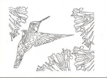 humming bird 2 by countrygirllover