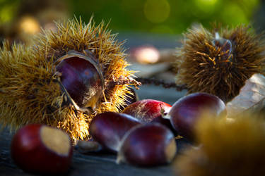 Chestnuts by N1cn4c