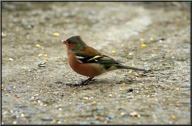 Bird by BezedHashe