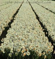 flower's by soho-power