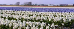 flower's I by soho-power
