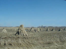 Amish Crops by Lectrichead