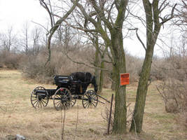Amish Buggy and Horse by Lectrichead