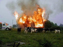 Cows Like Fire by Lectrichead