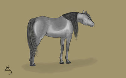 Grey horse by Sherlock-Marston