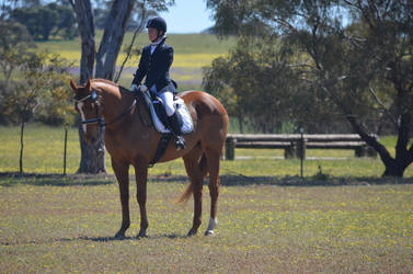 Puzzle Dressage Stock 1 by Cappyandme