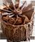 Chocolate dessert 50px by EXOstock