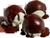 Pistachio ice cream with chocolate 50px by EXOstock