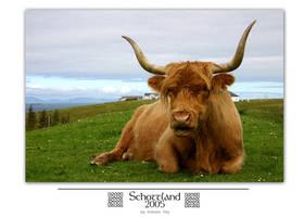 Schottland 05 - Horny Cattle by MrsMorzarella