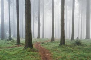 Into the Woods 1 by Regadenzia