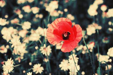 Her summer romance by iNeedChemicalX