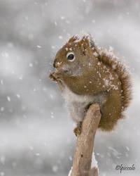 Squirrel by Les-Piccolo