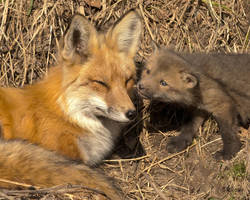 Mother and Kit 3 by Les-Piccolo