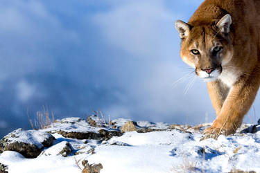 www.suhaderbent.com by catman-suha