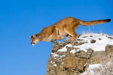 Puma 5 by catman-suha