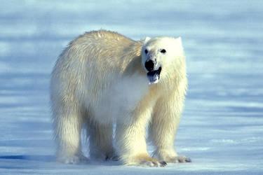 Polar.. by catman-suha