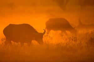 My Africa 60 by catman-suha