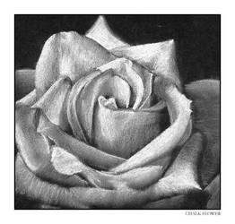 Chalk Flower by bulletinthegun