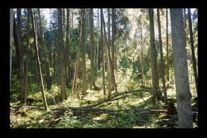 forest pic 1 by piraaja