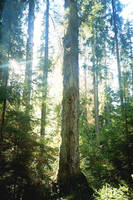 tree pic 1 by piraaja