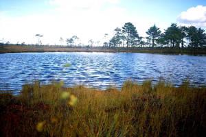 swamp  pic 6 by piraaja