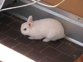 rabbit by smacc-stock