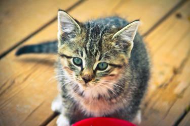 New Born Kitten by DrZapp