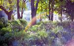 Garden Rainbow by DrZapp