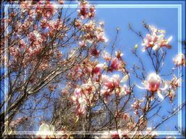 Spring Blossoms For catygraf by Misty2007