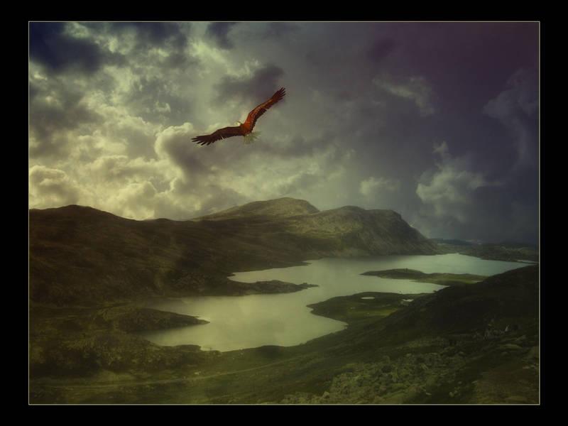 Flight by Misty2007