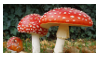 Amanita muscaria stamp by oceanstamps