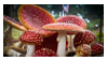 Amanita muscaria stamp 2 by oceanstamps