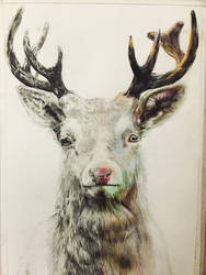 Deer  by Broung