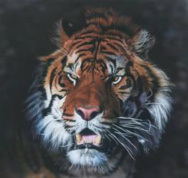 Tiger by hunterpaul
