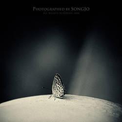 Tiny thing by SONGJO